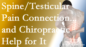 Manahawkin Chiropractic Center explains recent research on the connection of testicular pain to the spine and how chiropractic care helps its relief.